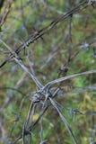 Провод колючки Стоковые Фото