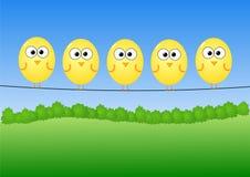провод птиц Стоковая Фотография