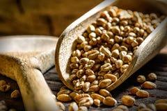 Провозглашанная тост пшеница Стоковое Изображение RF