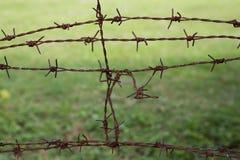 Проволочная изгородь колючки Стоковое Фото
