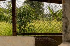 Проволочная изгородь - получившийся отказ курятник - зеленый сад сельской местности стоковые фотографии rf