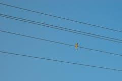 провод голубого неба птицы Стоковая Фотография RF