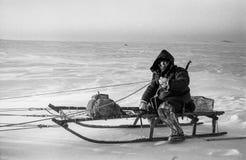 Проводка собаки охотника, Dixon, Krasnoyarsk Krai Стоковое Изображение