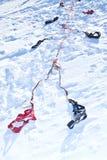 Проводка для участвовать в гонке собаки скелетона Стоковая Фотография