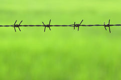 Провод колючки на зеленом цвете Стоковая Фотография RF