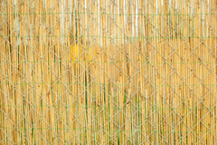 Проволочная изгородь покрытая соломой в саде Стоковое фото RF