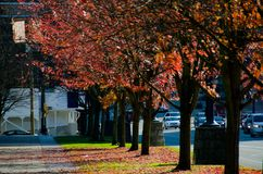 Прогулка бабьего лета вдоль западной улицы Georgia Стоковые Фотографии RF