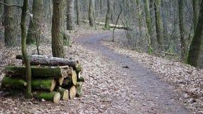 прогулка вдоль пути леса Стоковая Фотография
