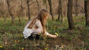 Прогулка весны в лесе стоковое изображение