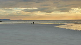 прогулка вечера собаки пляжа стоковое фото