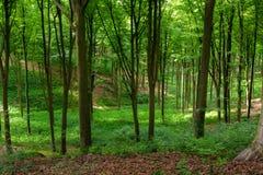 Прогулка в древесинах стоковая фотография rf
