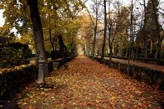 Прогулка в парке в осени стоковая фотография rf