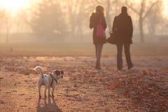 Прогулка в парке Стоковые Фотографии RF