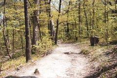 Прогулка в природе стоковое изображение