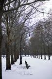 Прогулка зимы в парке Стоковое Изображение