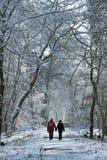 Прогулка зимы в пути леса Фонтенбло стоковое изображение