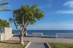 Прогулка и пляж Torrevieja стоковая фотография rf