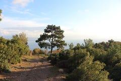 Прогулка леса в виде на море Стоковое Изображение