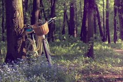 прогулка лета природы Стоковое фото RF