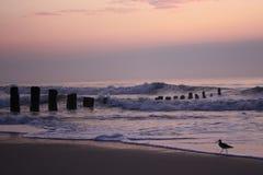 прогулка места утра пляжа Стоковое Фото