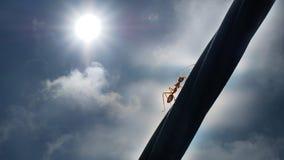 Прогулка муравья к вверх Стоковое Фото