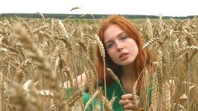 Прогулка на пшеничном поле видеоматериал