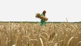 Прогулка на пшеничном поле сток-видео