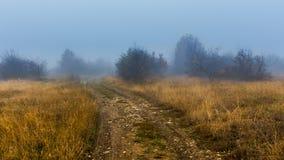 Прогулка осени в тумане Стоковое Фото