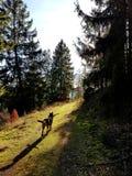 Прогулка природы леса неба Солнца собаки стоковые изображения rf