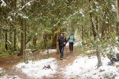 Прогулка путешественников через сосновый лес Стоковое Изображение