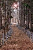 прогулка путя Стоковое Изображение RF