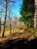 Прогулка пущи Стоковое фото RF