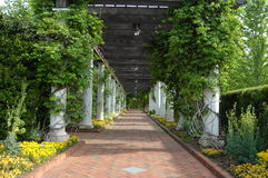 прогулка сада Стоковая Фотография