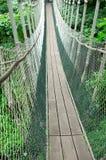 прогулка сени Стоковое Фото
