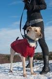 прогулка собаки Стоковые Изображения RF