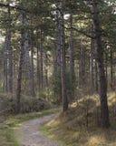Прогулка утра через сосновый лес с солнцем как раз поднимая стоковое изображение rf