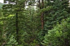 Прогулка через лес горы стоковое изображение rf