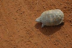 прогулка черепахи Стоковое Изображение