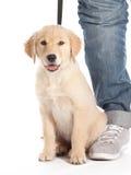 прогулка щенка Стоковое Фото