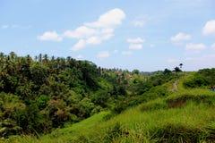 Прогулка Campuhan Риджа стоковая фотография
