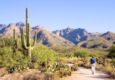 прогулка sabino каньона Стоковое Изображение RF