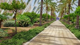 Прогулка Spanien Валенсия лета пальм стоковое фото rf