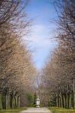 Прогулка ботанического сада Стоковое Фото