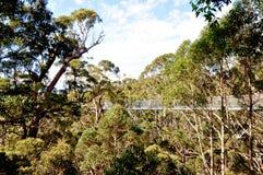 Прогулка верхней части дерева в пологе леса: Дания, западная Австралия Стоковое Изображение RF