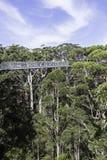 Прогулка верхней части дерева Стоковая Фотография