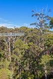 Прогулка верхней части дерева Стоковое Фото