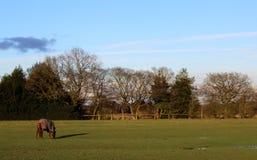 Прогулка весны в поле с лошадью Стоковая Фотография
