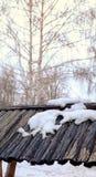 прогулка весны пущи дня слободская Стоковое Изображение