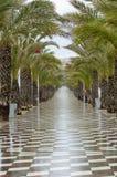 Прогулка выровнянная деревом Стоковая Фотография
