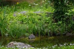 Прогулка в ботаническом саде стоковое фото